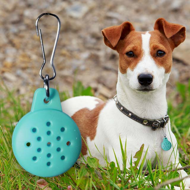Dog with teal pet essential oil diffuser