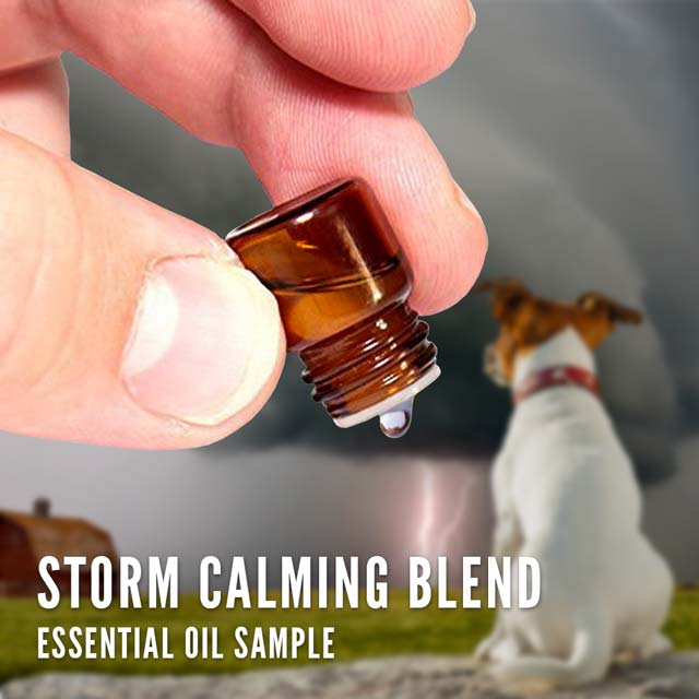 storm calming essential oil blend for pets